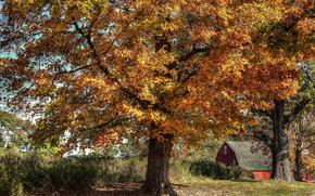 Пейзажи: осень, деревья, дом, пейзаж