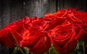 Цветы: розы, бутоны, букет, макро