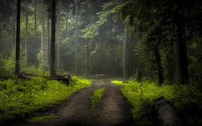 Природа: лес, деревья, дорога, природа