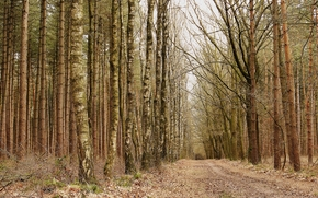 Природа: осень, лес, деревья, дорога, природа