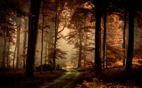 Природа: осень, лес, дорога, деревья, природа