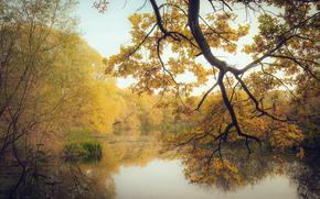 Природа: осень, озеро, лес, деревья, природа