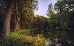 Природа: осень, лес, деревья, озеро, природа