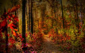 Природа: осень, лес, деревья, тропинка, природа