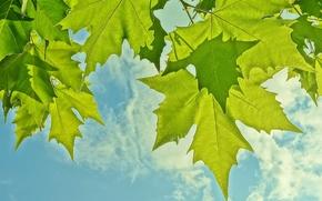 Макро: небо, листья, макро