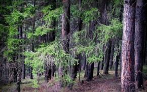 Природа: Весна, май, деревья, лес, природа, пейзаж, тайга