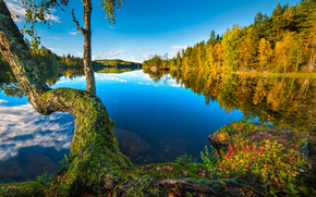 Пейзажи: S?tre, Hurum, Buskerud, Norway, Хурум, Бускеруд, Норвегия, озеро, дерево, лес, отражение