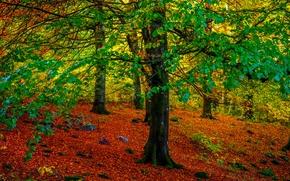Природа: лес, деревья, осень, природа