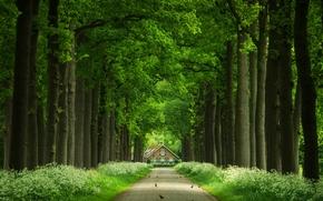 Пейзажи: дорога, деревья, дом, птицы, пейзаж