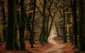 Природа: осень, дорога, лес, деревья, природа