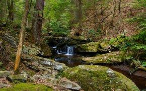 Природа: лес, деревья, речка, водопад, скалы, природа
