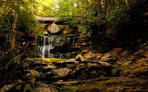 Природа: лес, деревья, водопад, скалы, мост, природа