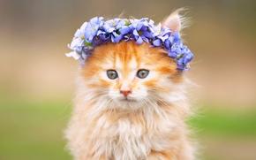 Животные: котёнок, пушистый, мордочка, венок, цветы