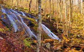 Природа: осень, лес, деревья, водопад, природа, панорама