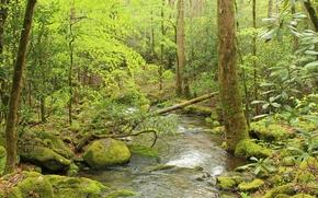 Природа: лес, деревья, река, камни, природа
