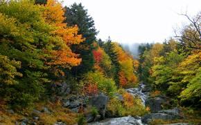 Природа: лес, деревья, осень, речка, скалы, водопад, природа