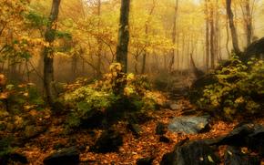 Природа: осень, лес, скалы, деревья, природа