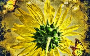 Рендеринг: подсолнух, бабочки, art