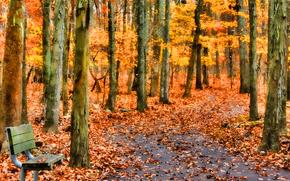 Пейзажи: осень, лес, парк, деревья, лавочка, пейзаж