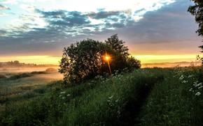 Пейзажи: Утро, восход солнца, лето, Пушкинские горы, Россия, рассвет, туман, трава, небо, облака, деревья, кусты, природа, пейзаж