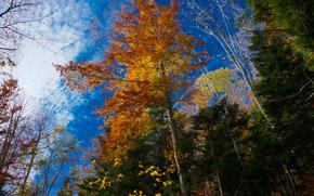 Природа: осень, деревья, кроны, верхушки, небо, природа