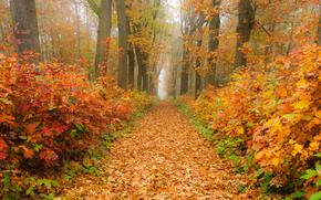 Пейзажи: осень, дорога, лес, деревья, пейзаж, панорама