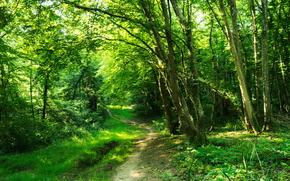 Природа: лес, деревья, тропинка, природа