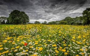 Пейзажи: поле, цветы, тучи, деревья, дейзаж
