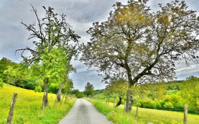 Пейзажи: поле, дорога, деревья, пейзаж