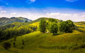 Пейзажи: холмы, деревья, пейзаж