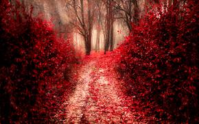 Природа: осень, дорога, деревья, лес, природа