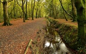 Природа: осень, лес, дорога, канава, деревья, парк, природа