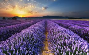 Пейзажи: Восход солнца на лавандовые поля, Провансе, Валенсоль, франция