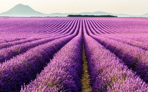 Пейзажи: лавандовые поля, Провансе, Валенсоль, франция