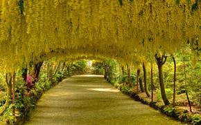 Пейзажи: сад, парк, дорога, деревья, Конви, Северный Уэльс, Великобритания