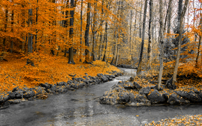 Природа: осень, речка, лес, деревья, природа