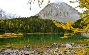 Пейзажи: Chester Lake, Canadian Rockies, Alberta, Canada, озеро Честер, Канадские Скалистые горы, Альберта, Канада, осень, озеро, горы, лес, ветки, лиственница