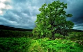 Пейзажи: поле, холмы, дерево, тучи, пейзаж