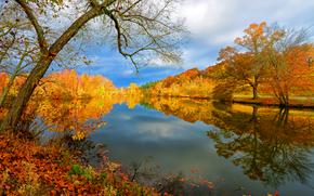 Пейзажи: осень, озеро, деревья, пейзаж