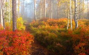 Природа: осень, лес, деревья, тропинка, природа, туман