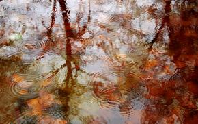 Природа: осень, вода, водоём, капли, природа