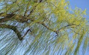 Природа: дерево, ветви, небо, природа
