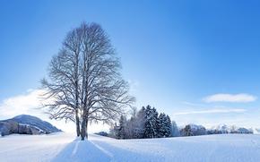 Пейзажи: зима, снег, деревья, пейзаж