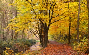 Природа: осень, парк, лес, деревья, дорога, природа