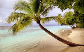 Пейзажи: море, берег, пальмы, пейзаж