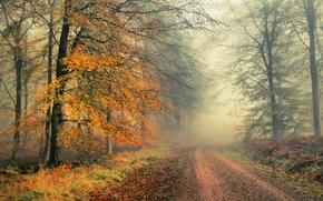 Пейзажи: осень, лес, деревья, дорога, пейзаж, туман
