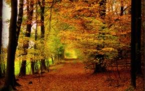 Пейзажи: осень, лес, деревья, дорога, природа