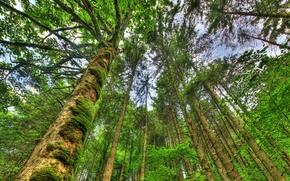 Природа: лес, деревья, кроны, природа