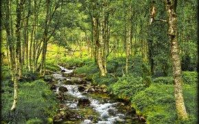 Природа: лес, река, деревья, природа