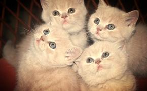 Животные: котята, животные, взгляд